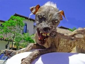 ugliest-dog-3